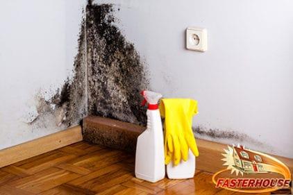 black mold dangers